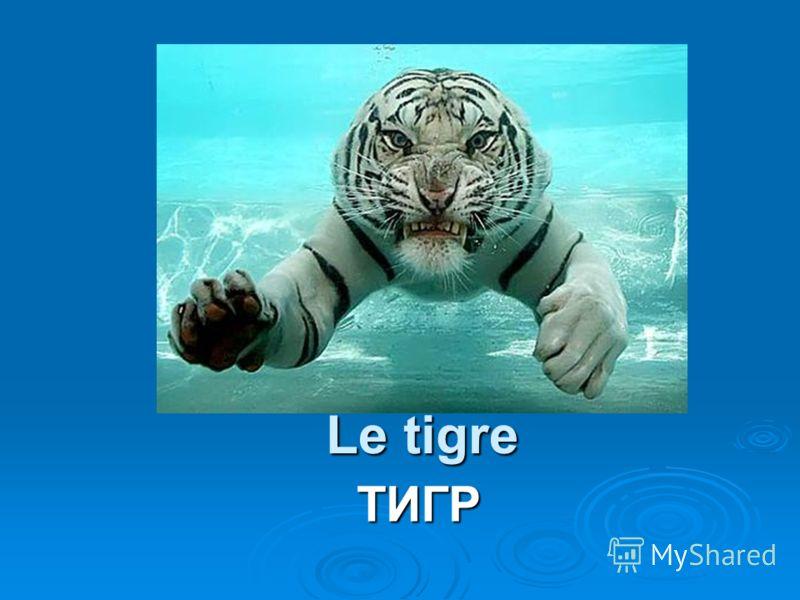 Le tigre ТИГР