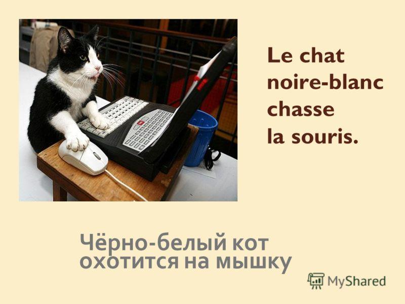 Le chat noire-blanc chasse la souris. Чёрно-белый кот охотится на мышку