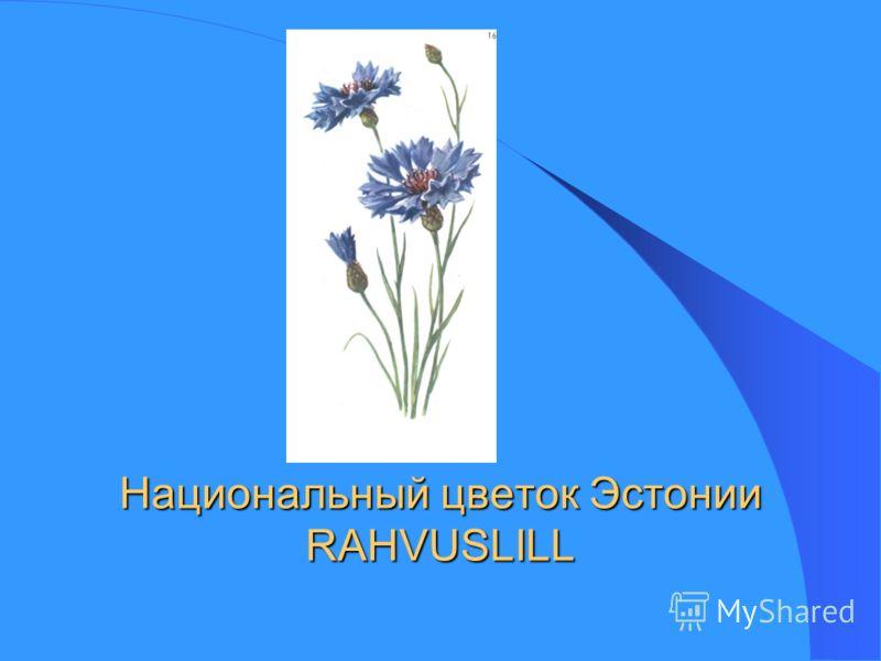 Национальный цветок Эстонии RAHVUSLILL