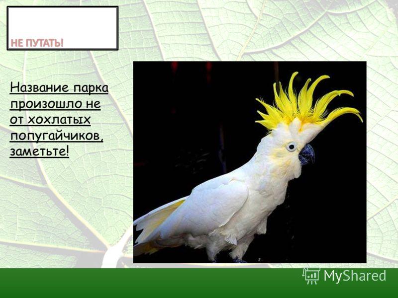 Название парка произошло не от хохлатых попугайчиков, заметьте!