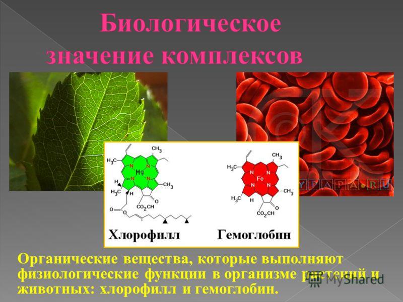 Органические вещества, которые выполняют физиологические функции в организме растений и животных: хлорофилл и гемоглобин.