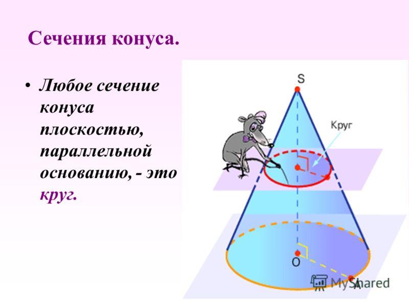 Любое сечение конуса плоскостью, параллельной основанию, - это круг. Сечения конуса.