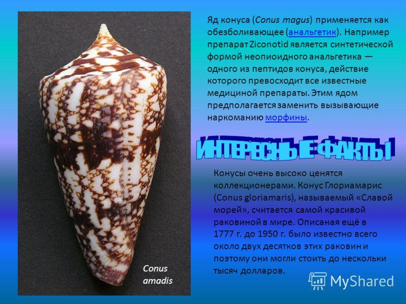 Яд конуса (Conus magus) применяется как обезболивающее (анальгетик). Например препарат Ziconotid является синтетической формой неопиоидного анальгетика одного из пептидов конуса, действие которого превосходит все известные медициной препараты. Этим я