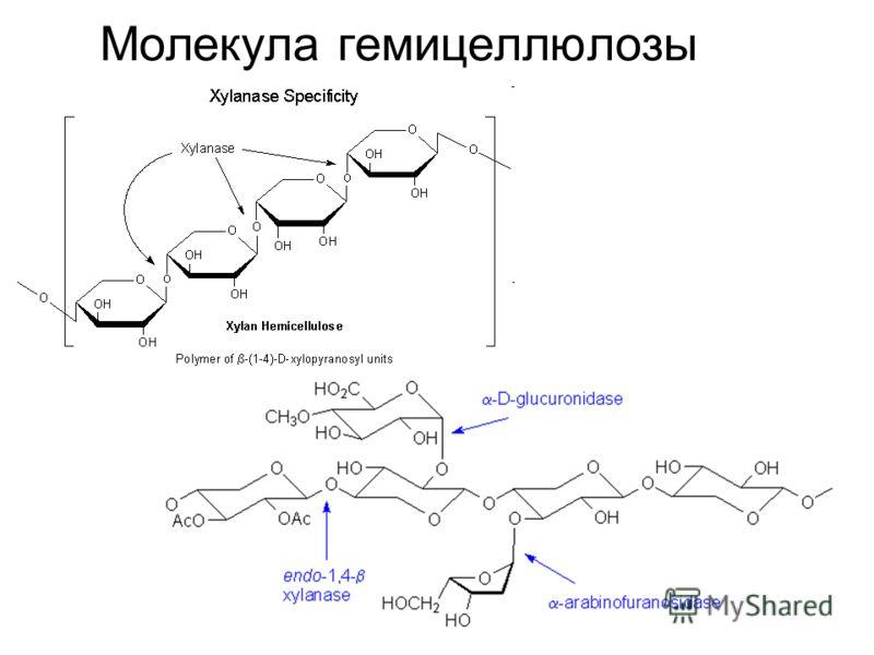 Молекула гемицеллюлозы