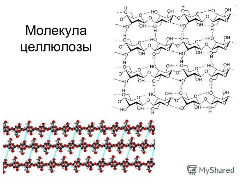Молекула целлюлозы