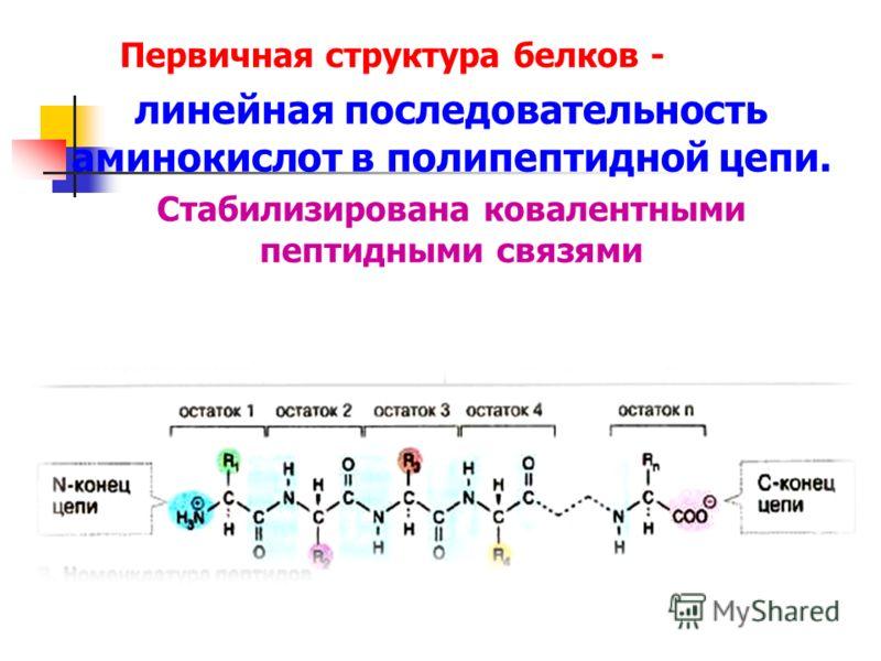 Первичная структура белков - линейная последовательность аминокислот в полипептидной цепи. Стабилизирована ковалентными пептидными связями