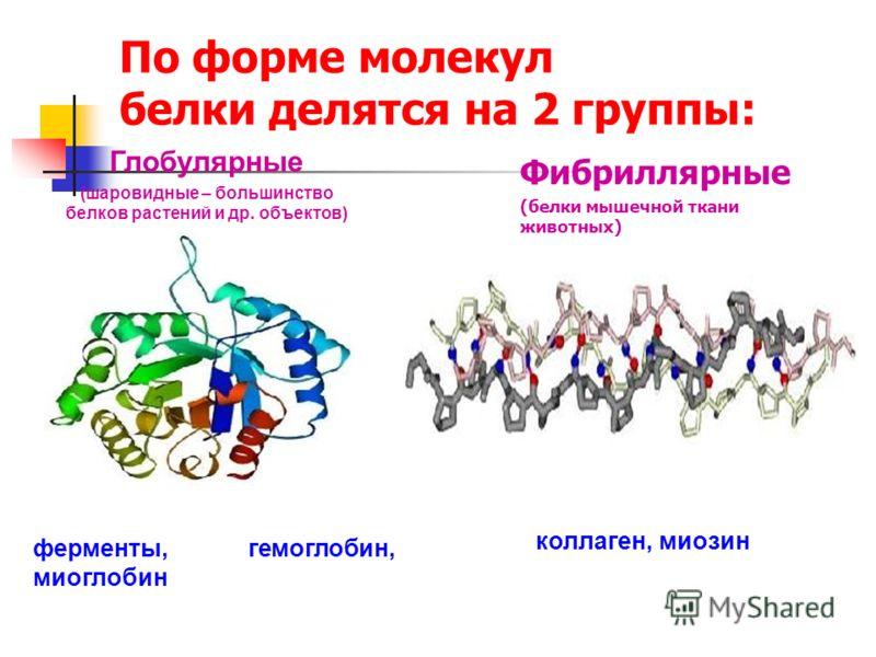 По форме молекул белки делятся на 2 группы: Фибриллярные (белки мышечной ткани животных) ферменты, гемоглобин, миоглобин Глобулярные (шаровидные – большинство белков растений и др. объектов) коллаген, миозин