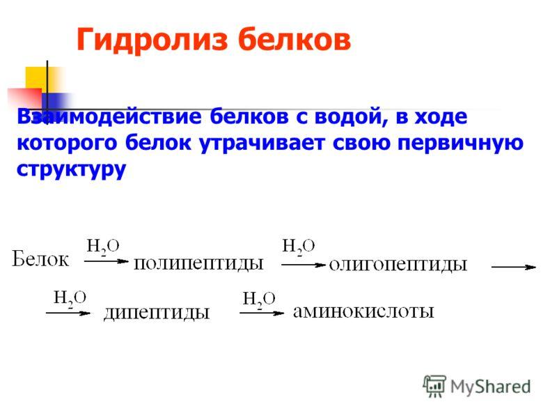 Гидролиз белков Взаимодействие белков с водой, в ходе которого белок утрачивает свою первичную структуру