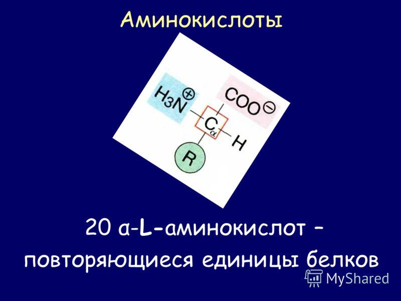 Аминокислоты 20 α-L-аминокислот – повторяющиеся единицы белков