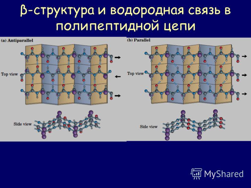 β-структура и водородная связь в полипептидной цепи
