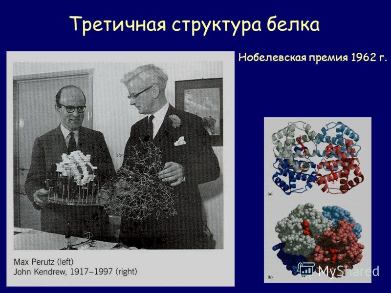 Третичная структура белка Нобелевская премия 1962 г.