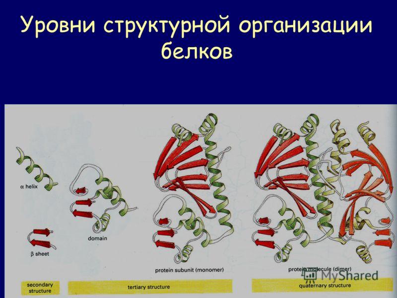 Уровни структурной организации белков