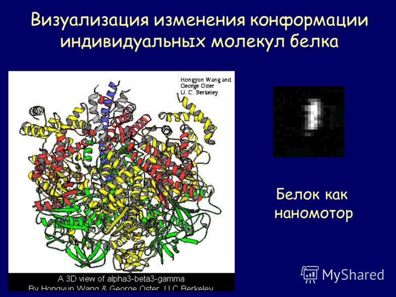 Визуализация изменения конформации индивидуальных молекул белка Белок как наномотор
