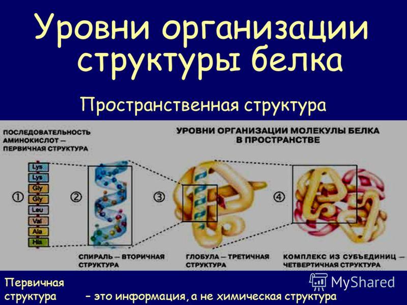Уровни организации структуры белка Пространственная структура Первичная структура – это информация, а не химическая структура