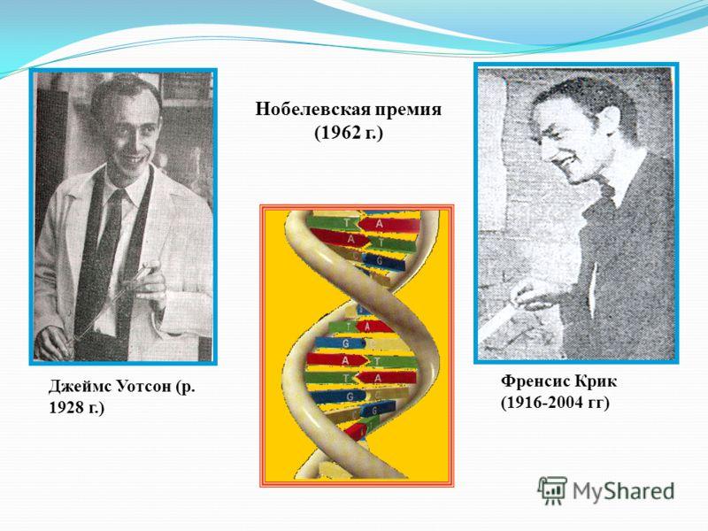 Френсис Крик (1916-2004 гг) Джеймс Уотсон (р. 1928 г.) Нобелевская премия (1962 г.)