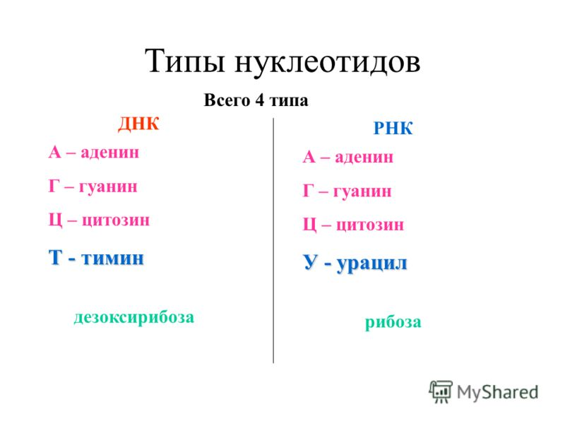 Тимин