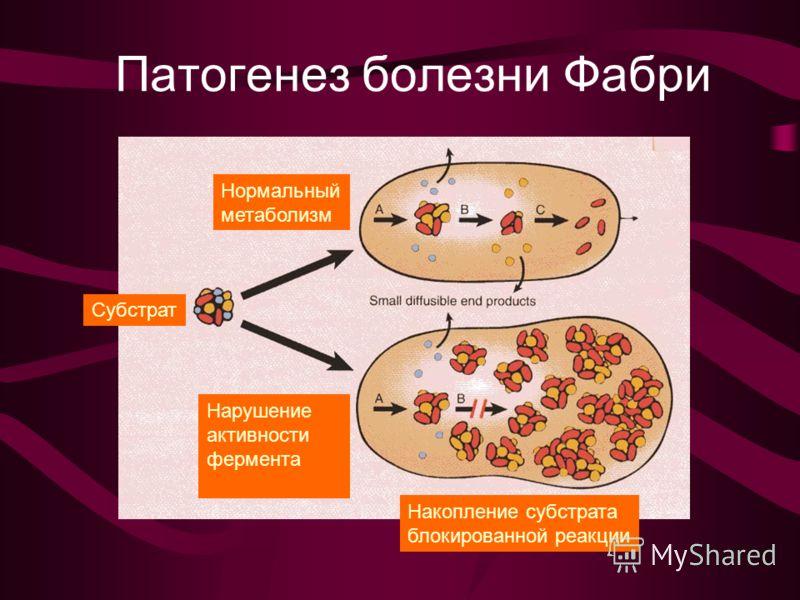метаболизм Субстрат