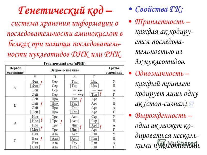 Нуклеиновые кислоты – органические нерегулярные поли- меры, состоящие из нуклеотидов 4-х сортов (основных).