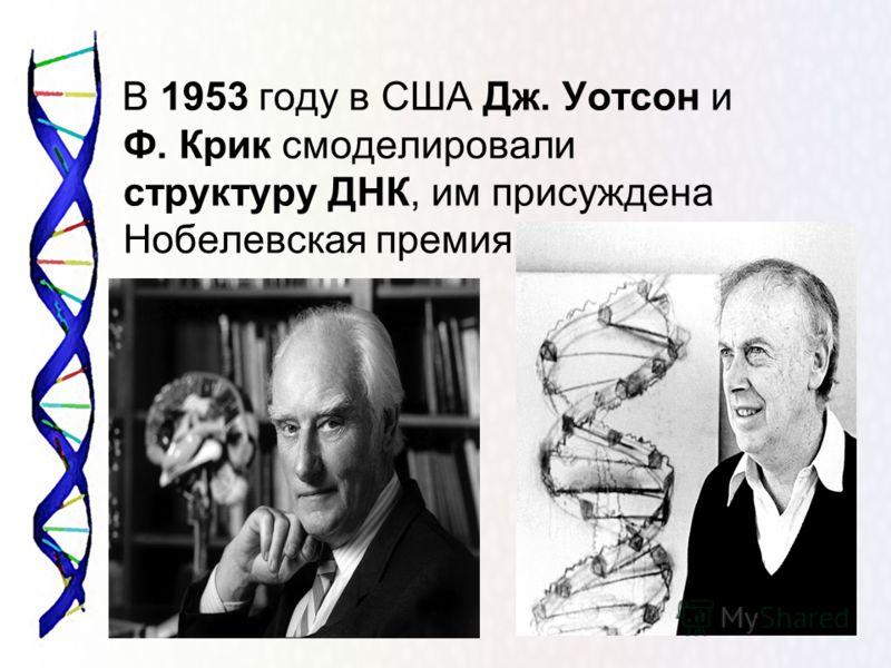 В 1953 году в США Дж. Уотсон и Ф. Крик смоделировали структуру ДНК, им присуждена Нобелевская премия