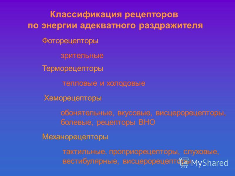 Классификация рецепторов по энергии адекватного раздражителя Фоторецепторы зрительные Терморецепторы тепловые и холодовые Хеморецепторы обонятельные, вкусовые, висцерорецепторы, болевые, рецепторы ВНО Механорецепторы тактильные, проприорецепторы, слу