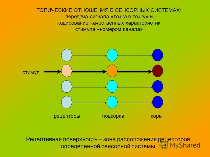 рецепторы подкорка кора ТОПИЧЕСКИЕ ОТНОШЕНИЯ В СЕНСОРНЫХ СИСТЕМАХ: передача сигнала «точка в точку» и кодирование качественных характеристик стимула «номером канала» стимул Рецептивная поверхность – зона расположения рецепторов определенной сенсорной