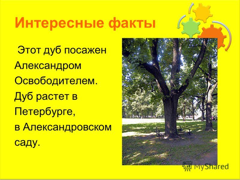 Интересные факты Этот дуб посажен Александром Освободителем. Дуб растет в Петербурге, в Александровском саду.