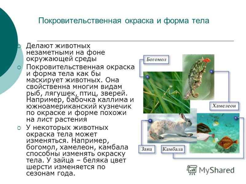 Покровительственная окраска и форма тела Делают животных незаметными на фоне окружающей среды Покровительственная окраска и форма тела как бы маскирует животных. Она свойственна многим видам рыб, лягушек, птиц, зверей. Например, бабочка каллима и южн