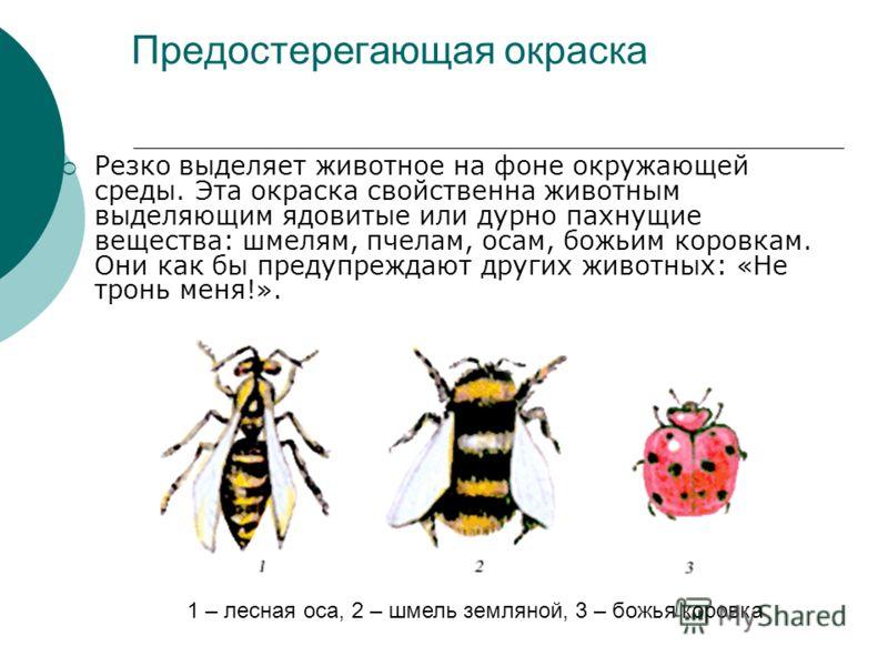 Предостерегающая окраска Резко выделяет животное на фоне окружающей среды. Эта окраска свойственна животным выделяющим ядовитые или дурно пахнущие вещества: шмелям, пчелам, осам, божьим коровкам. Они как бы предупреждают других животных: «Не тронь ме