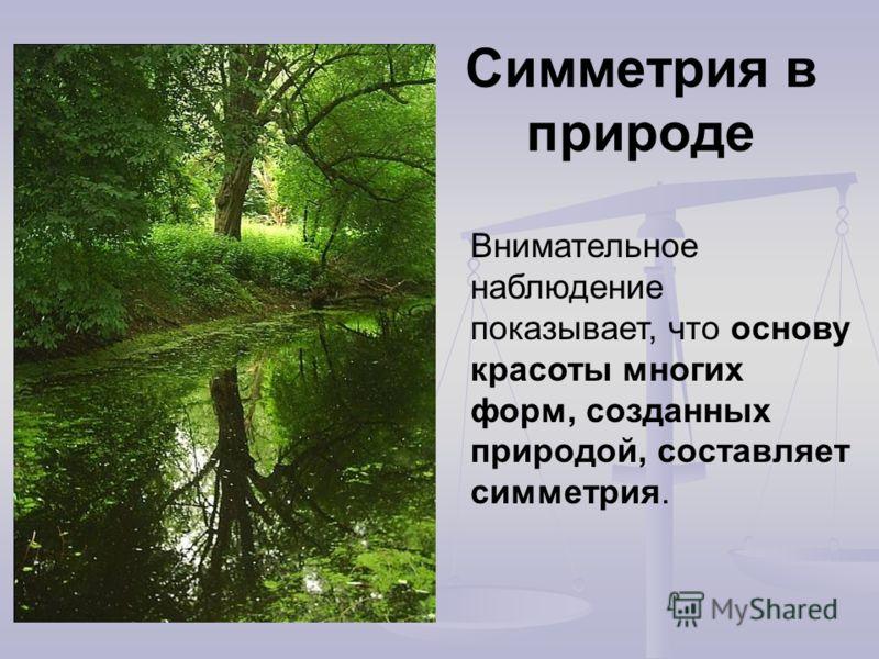 Симметрия в природе Внимательное наблюдение показывает, что основу красоты многих форм, созданных природой, составляет симметрия.