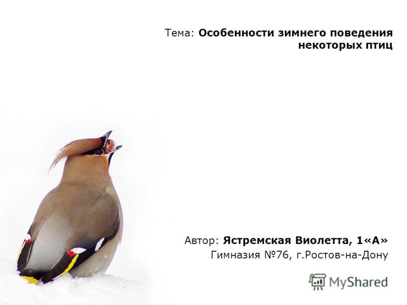 Тема: Особенности зимнего поведения некоторых птиц Автор: Ястремская Виолетта, 1«А» Гимназия 76, г.Ростов-на-Дону
