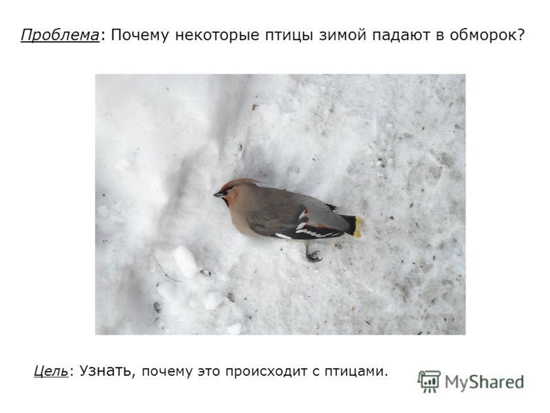 Проблема: Почему некоторые птицы зимой падают в обморок? Цель: У знать, почему это происходит с птицами.