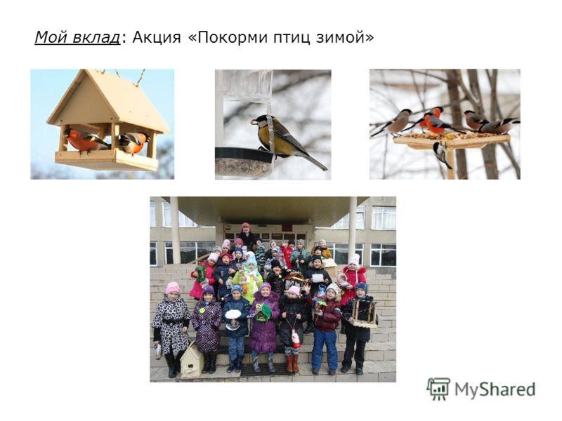 Мой вклад: Акция «Покорми птиц зимой»