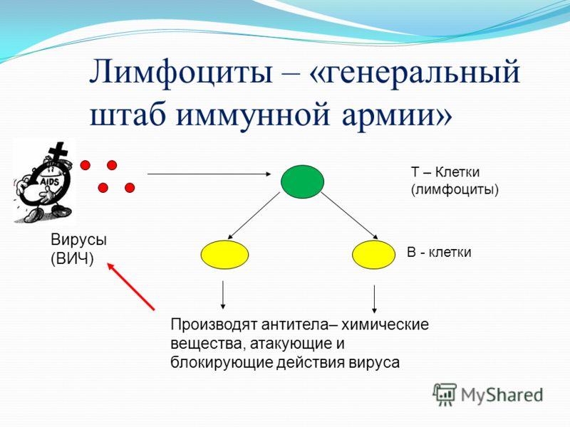 Схема инфицирования ВИЧ СD4 - лимфоцитов