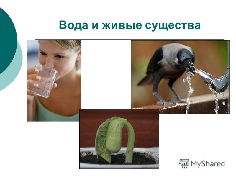 Вода и живые существа