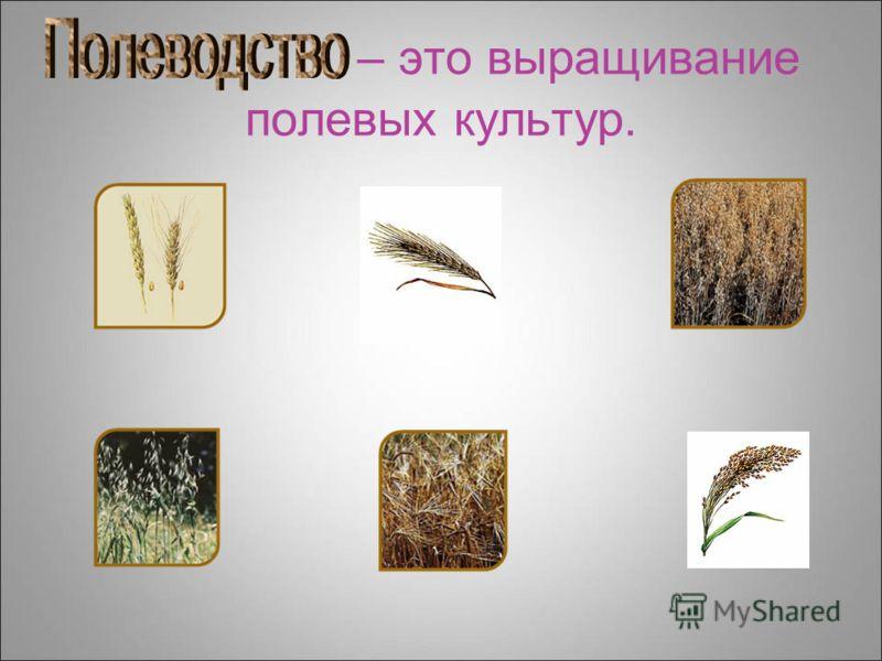 – это выращивание полевых культур.