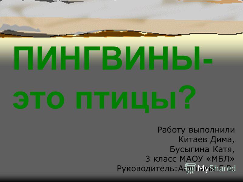 ПИНГВИНЫ- это птицы? Работу выполнили Китаев Дима, Бусыгина Катя, 3 класс МАОУ «МБЛ» Руководитель:Афонина Г.В.