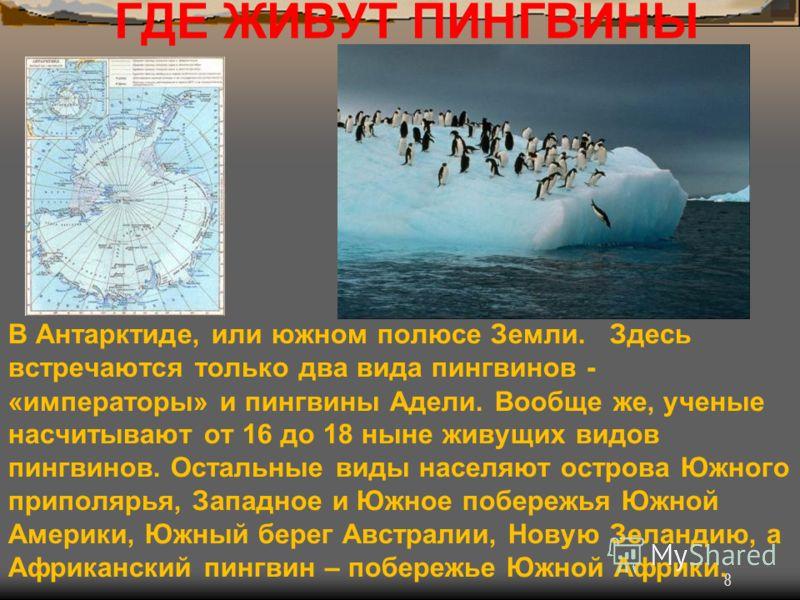 8 ГДЕ ЖИВУТ ПИНГВИНЫ В Антарктиде, или южном полюсе Земли. Здесь встречаются только два вида пингвинов - «императоры» и пингвины Адели. Вообще же, ученые насчитывают от 16 до 18 ныне живущих видов пингвинов. Остальные виды населяют острова Южного при