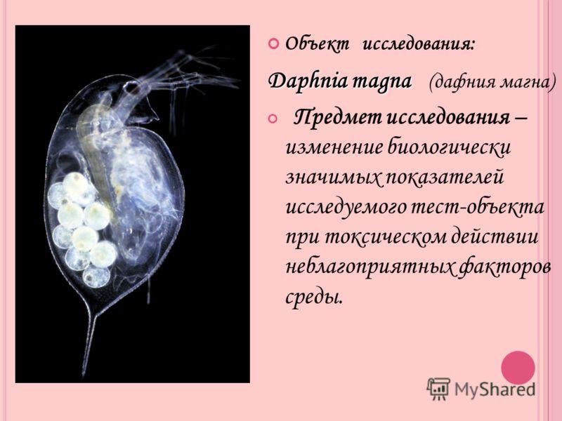 Объект исследования: Daphnia magna Daphnia magna (дафния магна) Предмет исследования – изменение биологически значимых показателей исследуемого тест-объекта при токсическом действии неблагоприятных факторов среды.