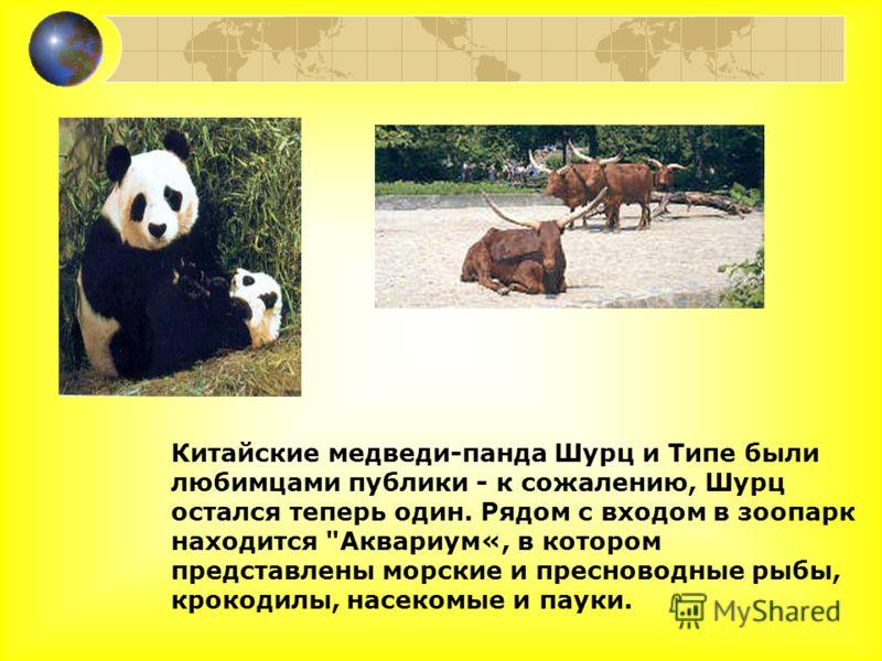 Китайские медведи-панда Шурц и Типе были любимцами публики - к сожалению, Шурц остался теперь один. Рядом с входом в зоопарк находится Аквариум«, в котором представлены морские и пресноводные рыбы, крокодилы, насекомые и пауки.