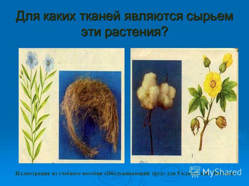 Для каких тканей являются сырьем эти растения? Иллюстрация из учебного пособия «Обслуживающий труд» для 5 класса А.Я. Лобазина