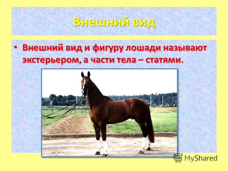 Внешний вид Внешний вид и фигуру лошади называют экстерьером, а части тела – статями. Внешний вид и фигуру лошади называют экстерьером, а части тела – статями.