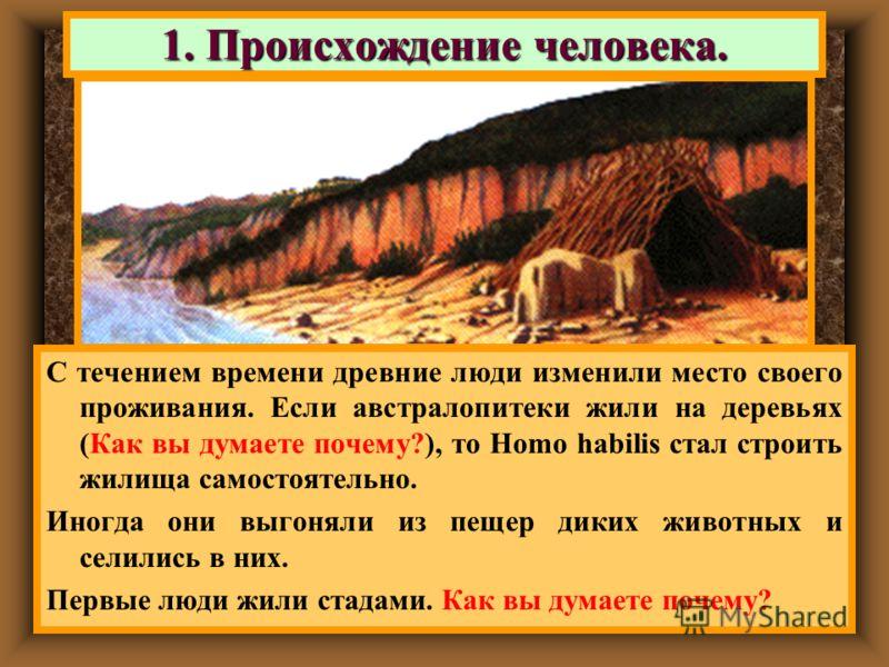 С течением времени древние люди изменили место своего проживания. Если австралопитеки жили на деревьях (Как вы думаете почему?), то Homo habilis стал строить жилища самостоятельно. Иногда они выгоняли из пещер диких животных и селились в них. Первые