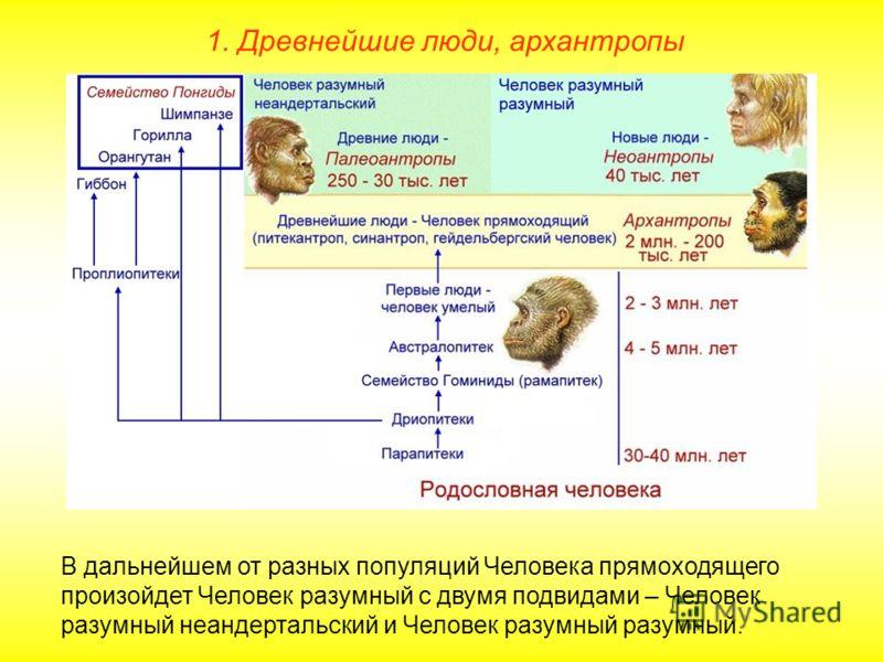 В дальнейшем от разных популяций Человека прямоходящего произойдет Человек разумный с двумя подвидами – Человек разумный неандертальский и Человек разумный разумный.
