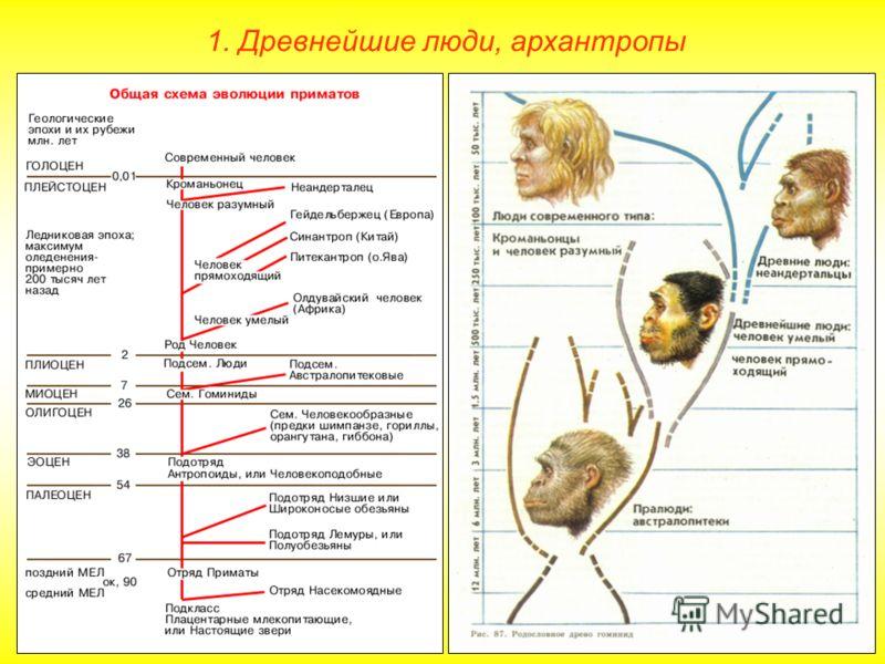 1. Древнейшие люди, архантропы