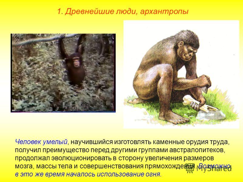 1. Древнейшие люди, архантропы Человек умелый, научившийся изготовлять каменные орудия труда, получил преимущество перед другими группами австралопитеков, продолжал эволюционировать в сторону увеличения размеров мозга, массы тела и совершенствования