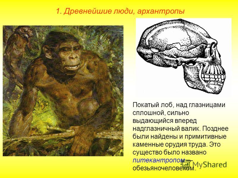 Покатый лоб, над глазницами сплошной, сильно выдающийся вперед надглазничный валик. Позднее были найдены и примитивные каменные орудия труда. Это существо было названо питекантропом обезьяночеловеком.