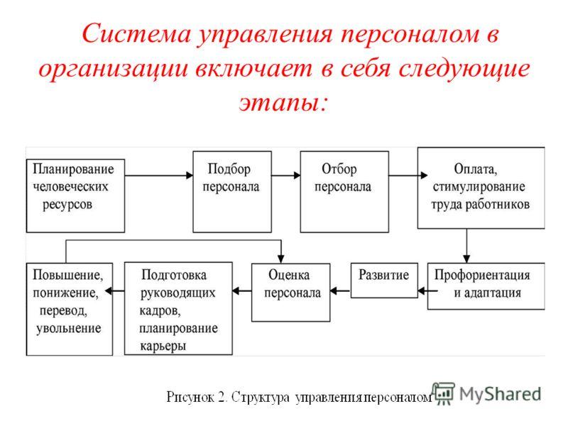 Система управления персоналом в организации включает в себя следующие этапы: