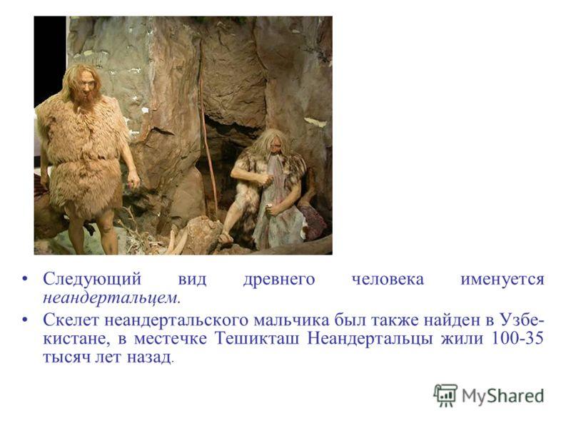 Следующий вид древнего человека именуется неандертальцем. Скелет неандертальского мальчика был также найден в Узбе- кистане, в местечке Тешикташ Неандертальцы жили 100-35 тысяч лет назад.