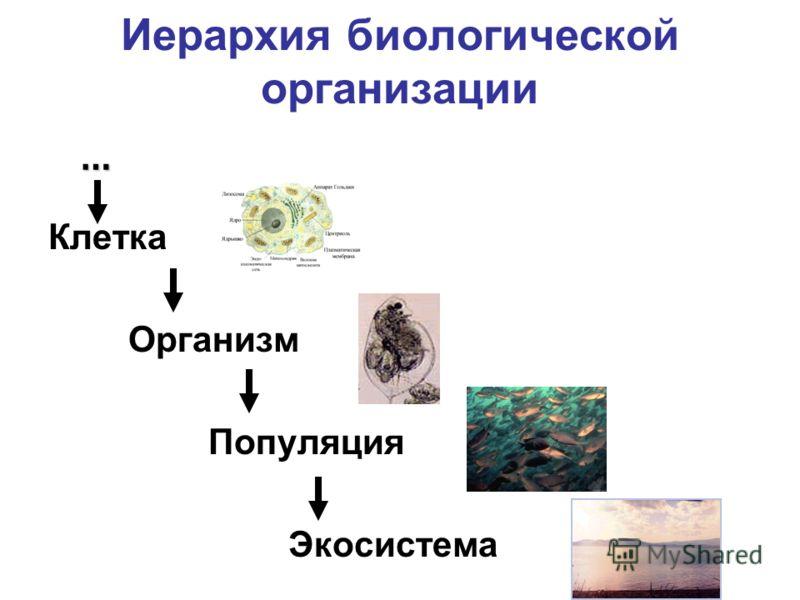 Иерархия биологической организации Клетка Организм Популяция Экосистема …