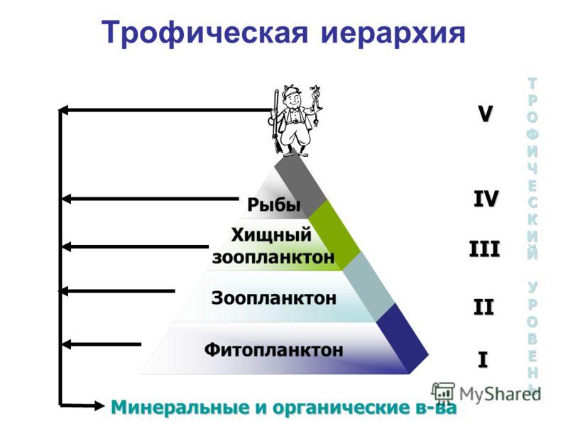Трофическая иерархия Рыбы Хищный зоопланктон Зоопланктон Фитопланктон Минеральные и органические в-ва V IV III II I ТРОФИЧЕСКИЙУРОВЕНЬ
